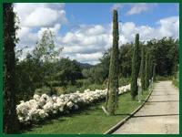 Micro gallery per Fashion Garden manutenzione giardini 001