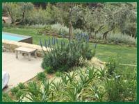 Micro gallery per Fashion Garden fornitura piante 003