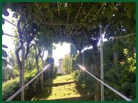Micro gallery per Fashion Garden manutenzione giardini 001 ENG