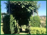 Micro gallery per Fashion Garden manutenzione giardini 002 ENG