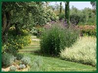 Micro gallery per Fashion Garden fornitura piante 002 ENG