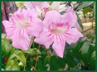 Micro gallery per Fashion Garden fornitura piante 003 ENG