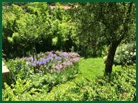 Micro gallery per Fashion Garden fornitura piante 004 ENG