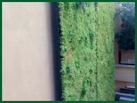 Micro gallery per Fashion Garden giardini vertcali 003