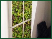 Micro gallery per Fashion Garden giardini vertcali 002 ENG