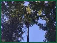 Micro gallery per Fashion Garden potatura alberi ad alto fusto 003